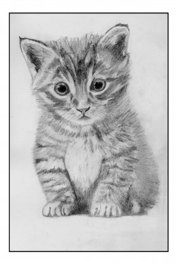 Kitten in Pencil - Standard